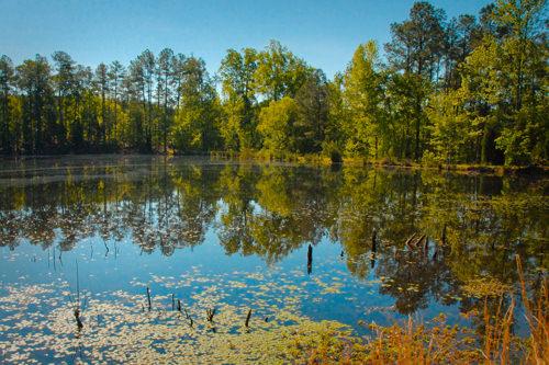 Triangle Broker - Pond | Chapel Hill, NC
